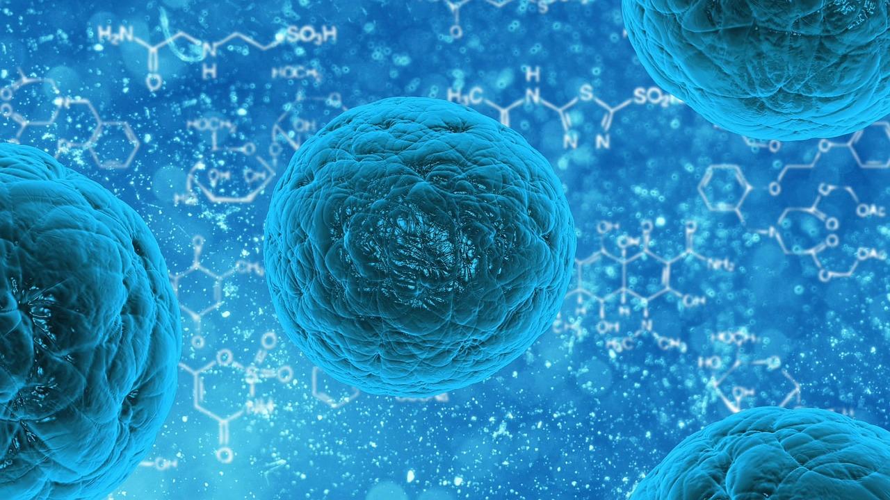 Richtlinie zur Förderung von deutsch-französischen Verbundvorhaben zu antimikrobiellen Resistenzen